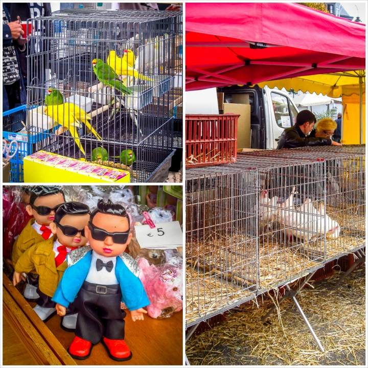 Some interesting stuff, from pet parrots to live ducks and Psy (gangnam style)!