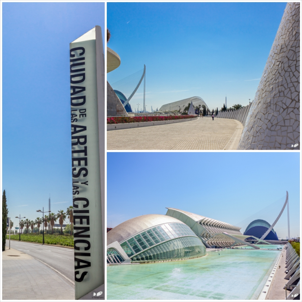 The Ciudad de las artes y las ciencias was a master piece of Valencia's very own celebrity architect Santiago Calatrava.