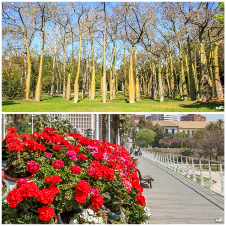 The entirety of the former riverbed of Turia river is now the so-called lungs of Valencia as it is converted into a park filled with trees and flowers. There were much more people here than at the Ciudad complex when we visited Valencia.