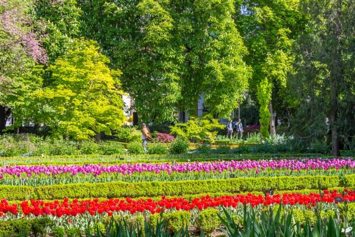 Real Jardin Botanico de Madrid, Madrid